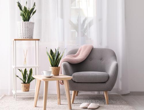 Piante da appartamento: quali scegliere e come curarle?
